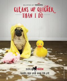 What's the best flooring for dogs? We've gathered the top 5 dog friendly flooring options to help keep your pet safe and your home stylish. Mohawk Flooring, Best Flooring, Flooring Options, Best Floors For Dogs, Doug The Pug, Love Your Pet, Waterproof Flooring, Pet Safe, Dog Friends
