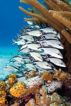 Best Overall Diving in the Caribbean & Atlantic: #1 Bahamas