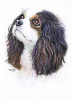 Cavalier King Charles by Karen Hull Animal Paintings, Animal Drawings, Pencil Drawings, Art Drawings, Dog Pencil Drawing, Color Pencil Art, King Charles Spaniel, Dog Portraits, Dog Art