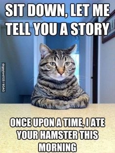 Story time with cat.