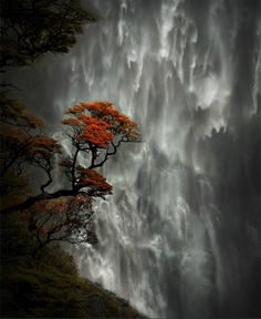 Devil's Punchbowl Falls in NewZealand is the tallest and the most prominent waterfall feature in the Arthur's Pass area. Description from 1000lonelyplaces.com. I searched for this on bing.com/images