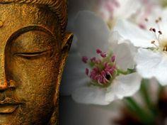 Zen for the soul . Guided Mindfulness Meditation, Zen Meditation, Free Psychic Chat, Buda Zen, Bali Retreat, Buddha Face, Gautama Buddha, Buddhist Art, White Picture
