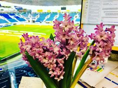 #firstdayofspring #1march #1martie #martisor #tradition #romanian #bulgarian #spring #traditions #spring2017 #springlove #flowers #flower #smellslikespring #lovefortraditions #traditionslove #romania