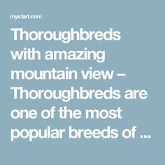 Thoroughbreds with amazing mountain view – Thoroughbreds are one of the most popular breeds of horse in the world today, known as a racing horse, and developed from a mix of Turkish and Arabian horses that were develop within English blood lines in the 17th century.
