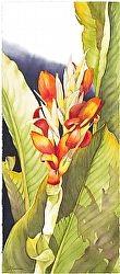 Celebrating Paradise #2 by Barbara Groenteman Watercolor ~ x