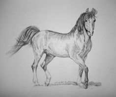 images pencil drawings of horses | Horse Drawings