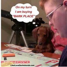 . #funnydogwithcaptions