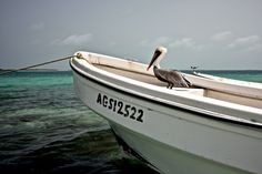 Pelican and Ms Seagull :-) Sailing Trips, Thunderstorms, Grenada, Maya, Around The Worlds, Boat, Friends, Places, Lightning Storms