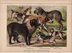 1880 DOG breeds ANTIQUE LITHOGRAPH original antique dog animal print - fox and blood hound st. bernard pointer cocker & king charles spaniel by antiqueprintstore on Etsy