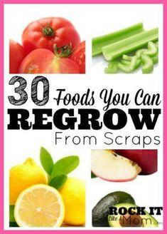 5 Plants to regrow from kitchen scraps #vegetable_gardening