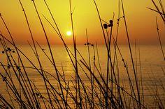 """""""#Sunset"""" by Carlos Caetano #CoastalArt"""