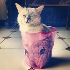 15Fotografías que demuestran que los gatos son líquidos