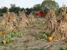 Passion for the Past: A Fall Harvest Link to the Past