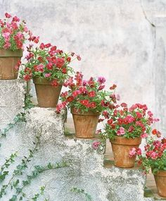 Pretty pots of pink pansies line the steps. i really love this and with the plain terra cotta pots. maybe not pansies though. Beautiful Gardens, Beautiful Flowers, Outside Stairs, Outdoor Stairs, Deco Nature, Terracota, Deco Floral, My Secret Garden, Dream Garden