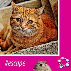 #escape www.venue10.com