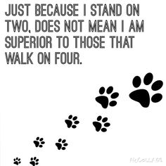 Animal rights! A human life is no more important than an animals life. So stop thinking you are superior. Dog Quotes, Animal Quotes, Animal Rights Quotes, Dog Love, Puppy Love, Vegan Quotes, Stop Animal Cruelty, Back To Nature, Animal Welfare