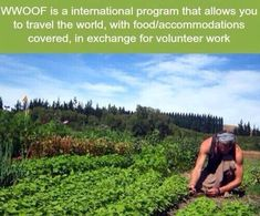 - WWOOF is a international program that allows you to travel the world, with food/accommodations covered, in exchange for volunteer work by leila Oh The Places You'll Go, Places To Travel, Travel Destinations, The Farm, Volunteer Work, Just Dream, Wtf Fun Facts, Random Facts, Funny Facts
