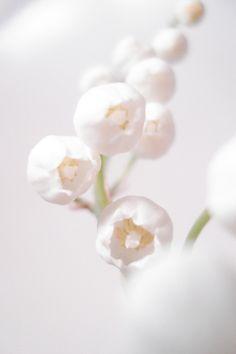 muguet  #flora #flower #white