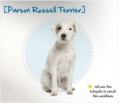 Learn about common Bedlington Terrier health issues and other facts. See how Petplan's Bedlington Terrier insurance can save you up to on vet bills Beautiful Dog Breeds, Beautiful Dogs, Amazing Dogs, Entlebucher Mountain Dog, Maremma Sheepdog, Czechoslovakian Wolfdog, Parson Russell Terrier, Different Dogs, Alaskan Malamute