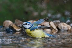 Attracting Birds Starts With Fresh Water on http://www.hortmag.com