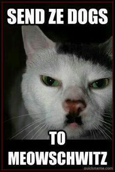 quickmeme is your best source for fun and entertainment. Share & caption memes, and post anything you find interesting or that makes you laugh. Cat Captions, Just For Fun, Kitten, Cats, Memes, Funny, Movie Posters, Cute Kittens, Kitty