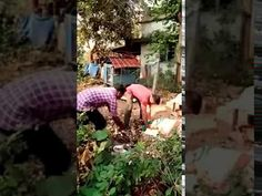 Python Captured from the premise of Malampuzha,Palakkad ditrict ,Kerala sate of india . Latest Video, Youtube, Youtubers, Youtube Movies
