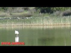 ΣΑΜΟΣ ΤΟ ΝΗΣΙ ΤΟΥ ΠΥΘΑΓΟΡΑ-Η ΚΥΡΑ ΤΩΝ ΑΜΠΕΛΙΩΝ 1: ΛΙΜΝΗ  ΑΛΥΚΗ Samos