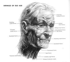 """Atlast of Human Anatomy for the Artist"" (Stephen Rogers Peck) - Wrinkles in old age"