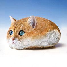 Animal Mashups, Animal Memes, Funny Cats, Funny Animals, Cute Animals, Foto Face, Photoshopped Animals, Funny Animal Photos, Animal Pictures