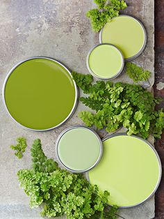 """Greens If you're looking for a green with a little zip, give fern greens a whirl. """"These greens are energetic. They work well in homes with families because they match the vibrancy of active kids,"""" says Jill Goldberg, a Boston interior designer. To select a fern green that isn't acidic, look for paint colors with gray undertones."""