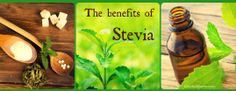 Read my latest article on the benefits of stevia. It is an incredible, all-natural sweetener. Enjoy!