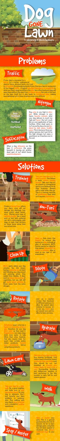 Done Gone Lawn - Tips for Pet Lawn Damage #solutions #yard