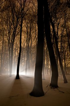 Silence of Snowy Forest `by Joop Snijder