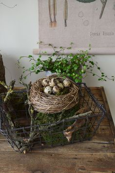 Easter decoration with natural moss Mühlenbeckia quail eggs just make yourself Deco de ., Easter decorations with natural moss Mühlenbeckia quail eggs just make your own deco . Easter decorations with natural moss Mühlenbeckia quail eggs . Quail Eggs, Garden Deco, Autumn Garden, Easter Wreaths, Easter Crafts, Easter Decor, Greenery, Farmhouse Decor, Make It Yourself