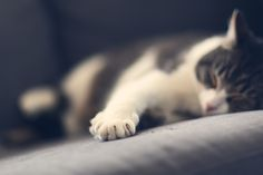 [フリー画像素材] 動物, 哺乳類, 猫 / ネコ, 寝顔 / 寝姿 ID:201503060400