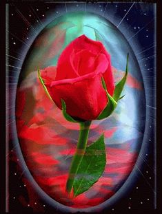Good Night Greetings, Good Night Messages, Beautiful Flowers Pictures, Beautiful Rose Flowers, Rosas Gif, Free Birthday Wishes, Beau Gif, Rose Video, Flowers Gif