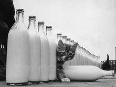 #cats #curiouscat