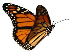 Image result for Butterfly with Moving Wings GIF