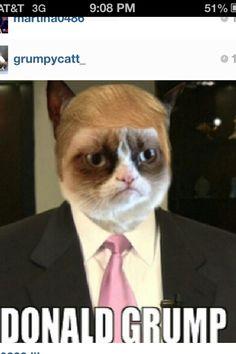 grumpy-cat-meme-sadden-your-day Snappy Pixels - Funny Cat Quotes Grumpy Cat Quotes, Funny Grumpy Cat Memes, Cat Jokes, Memes Funny Faces, Animal Jokes, Funny Animal Memes, Funny Animal Pictures, Funny Cats, Cute Cats