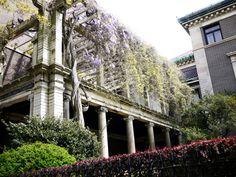 Pratt lilacs