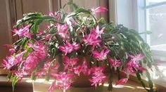 Resultado de imagen para deco interior c plantas y mandalas