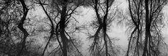 Neural trees by Francesco Stingi on 500px