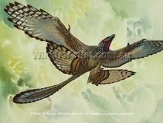 Microraptor by Peter Schouten.