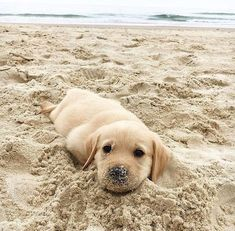 Cute puppers enjoying the beach on an cloudy day. - #funny #gifs #viralvids #funnypics #cute more at: http://www.theviralmonster.com