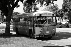 School bus what I learned on in 77