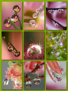 so beautifully delicate Love Collage, Beautiful Collage, Beautiful Love, Decoupage Vintage, Collages, Dew Drops, Water Droplets, Everything Pink, Nature Crafts