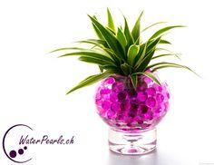 Pinke Waterpearls mit grüner Pflanze kombiniert
