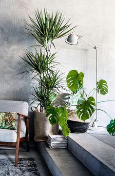 Urban Jungle - De woontrend van 2018 - Planten in je woonkamer zijn hot! Laat je inspireren en bekijk hoe je jouw paleisje nog groener maakt. P.s. Ook geschikt voor mensen zonder groene vingers ;-).