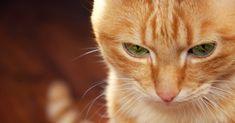 chaud blondes serré chatte collant humide chatte noire