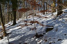 Trees, mountains, forest and snow with sunrays during winter.